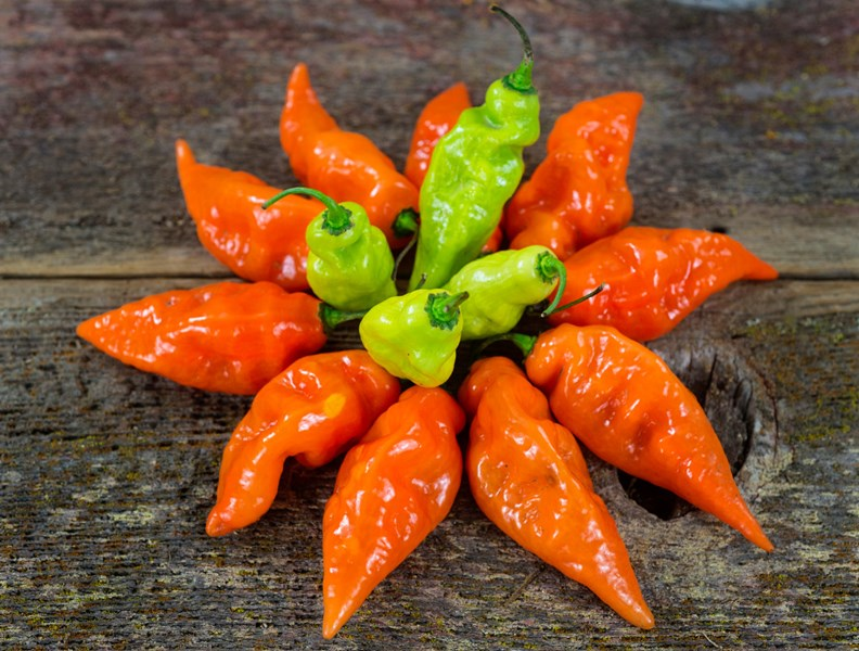 LOW_RES_FOR_WEB_Pepper-Habanada-Sweet-Habanero-DSC02635.jpg