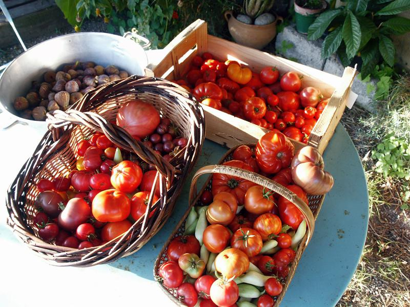 table-toms-figues.jpg