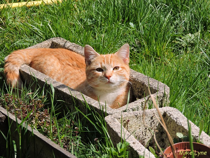 Tirouloulou-chat_DSCN0517.jpg