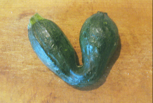 courgette-pli.png