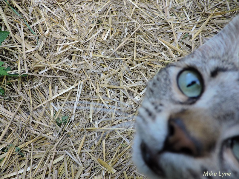 la serre_paillage_chat_DSCN1004.jpg