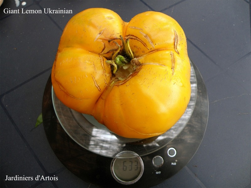 giant lemon ukrainian1.jpg