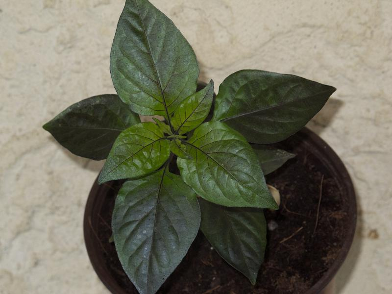 Black Bhut - 4 avril.jpg