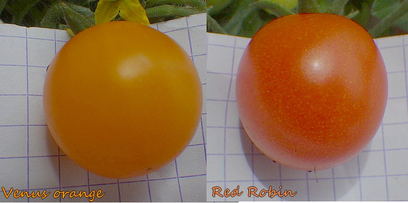 comp venus robin fruits.jpg