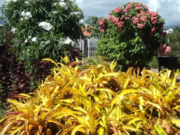 Mon jardin tropical semences for Jardin tropical guadeloupe