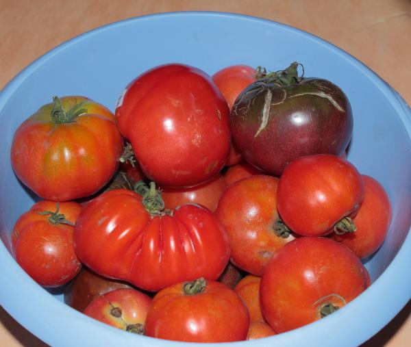 Eric62 tomates 2014 page 5 semences - Quand repiquer les tomates en pleine terre ...