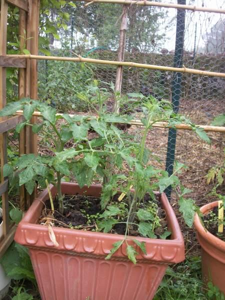 Pour avoir la meilleur preparation d 39 un plan de tomate - Quand mettre du fumier de cheval dans le jardin ...