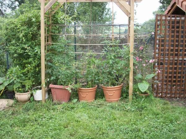 tomate en pot au jardin forum de jardinage. Black Bedroom Furniture Sets. Home Design Ideas