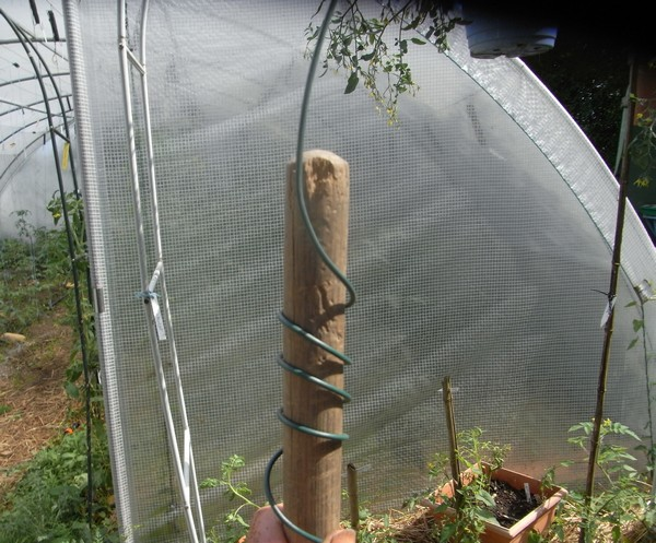 Tomates en suspension semences - Tuteur tomate spirale leclerc ...