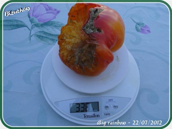 2012 les tomates lyonnaises chez herv saison 2012 page 14 semences. Black Bedroom Furniture Sets. Home Design Ideas