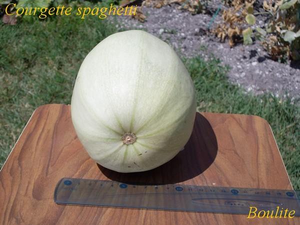 Il y a du melon chez boulite page 2 semences - Quand cueillir un melon ...