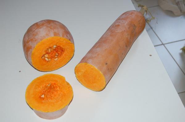 Courge de nice fruits longs semences - Courge de nice ...