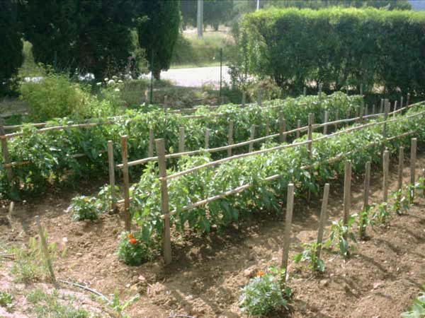 Bien-aimé Système de tuteurage pour tomates à croissance déterminée  TF69
