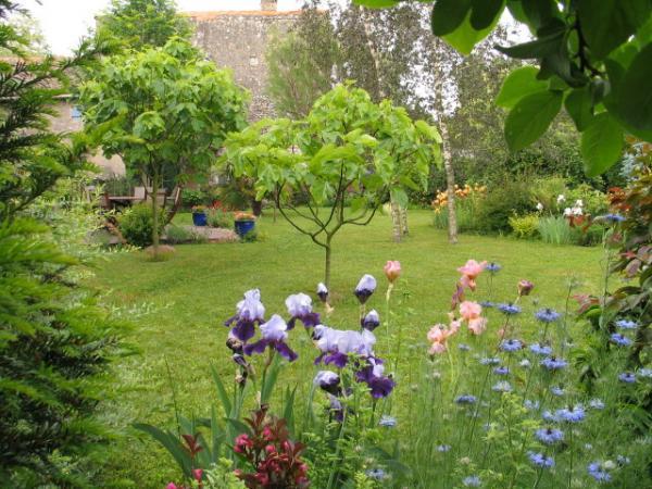 Jardin d 39 ornement en dr me proven ale semences for Sapin d ornement jardin