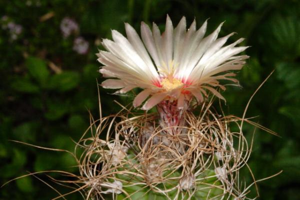 cactus et plantes grasses en provence