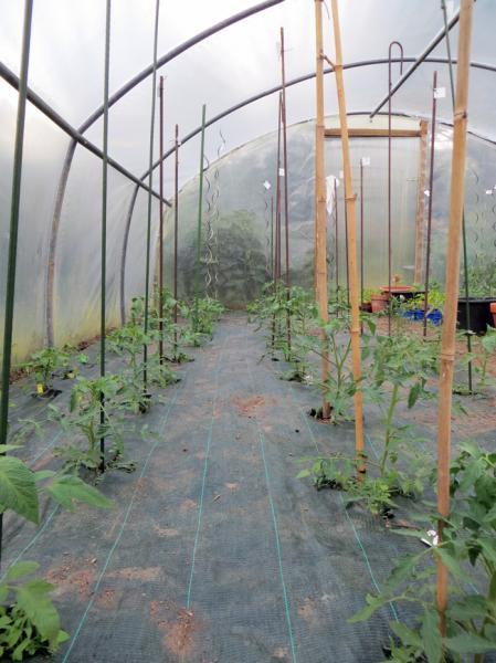 tomates 2014 dans le 44 semences. Black Bedroom Furniture Sets. Home Design Ideas